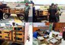 BKSDA Jakarta Gagalkan Penyelundupan 353 Ekor Burung Nuri