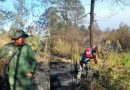 Petugas Berhasil Padamkan Kebakaran di Gunung Lawu