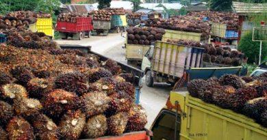 Berlaku Denda, Eksportir Sumber Daya Alam Tidak Simpan Uangnya di Indonesia