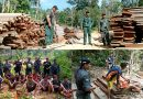 Operasi Gabungan KLHK, TNI, Polri Berhasil Tangkap 17 Pelaku Pembalakan Liar di dekat Perbatasan RI-Malaysia