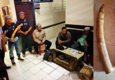 Gading Gajah Berserta Pemiliknya Diamankan Petugas Gabungan di Jambi