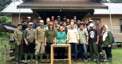 TNBBBR-BKSDA Kalteng dan Yayasan BOS Lepas 3 Orangutan ke Alam Liar